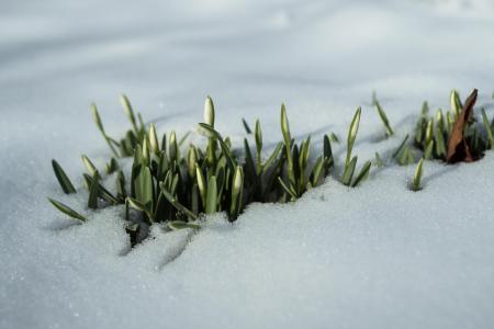 De lente komt