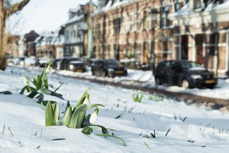 Het voorjaar komt