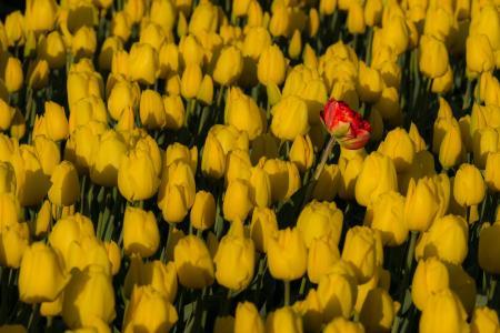 Geel met rood