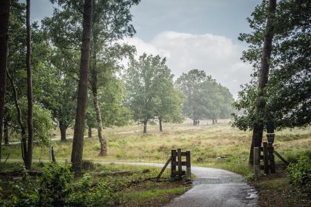 Schuiten voor de regen